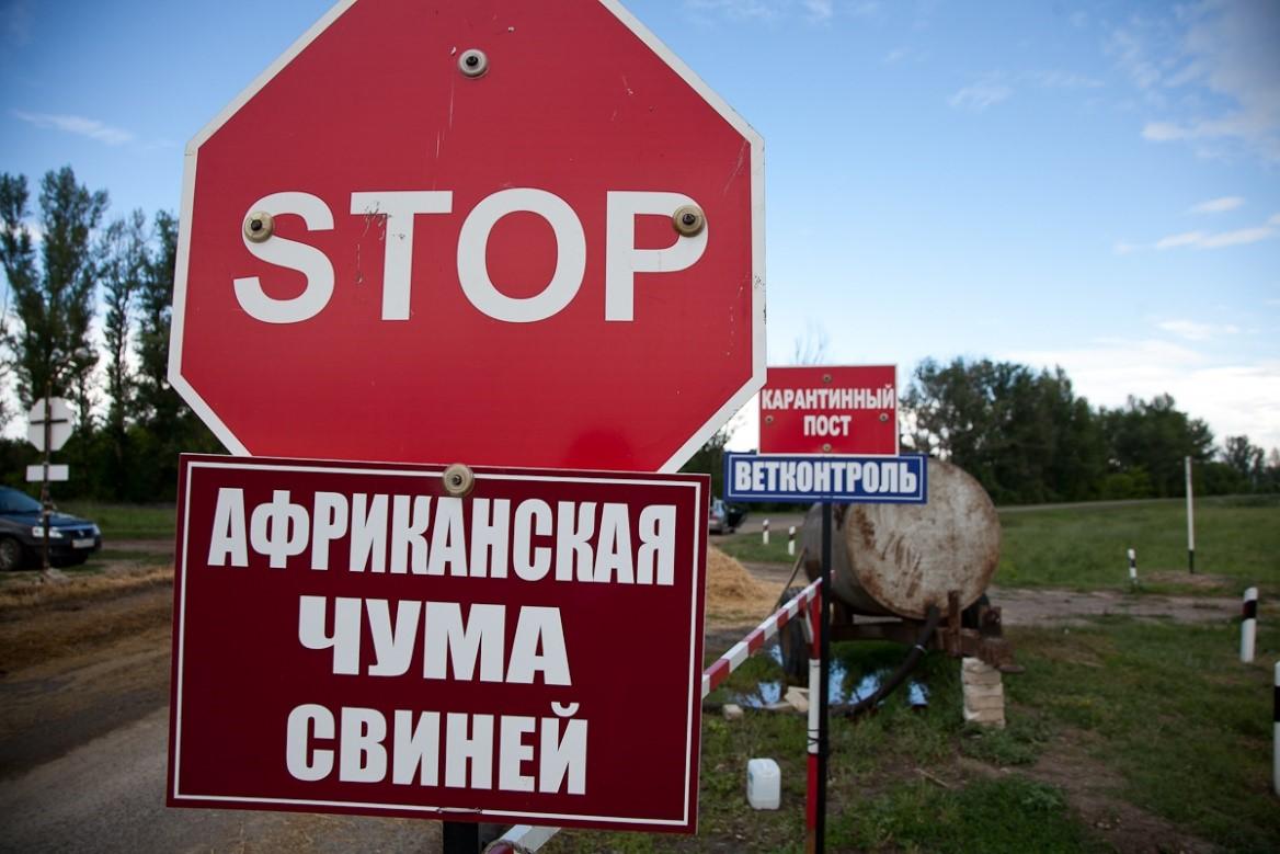 Предупреждение об африканской чуме свиней