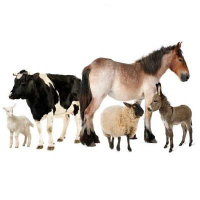 Гамавит применяют для различных видов с/х животных