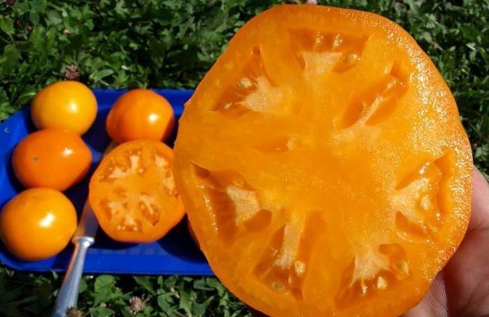Томат Хурма – оранжевое чудо с великолепным вкусом
