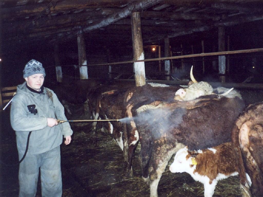 Аэрозольная обработка скота