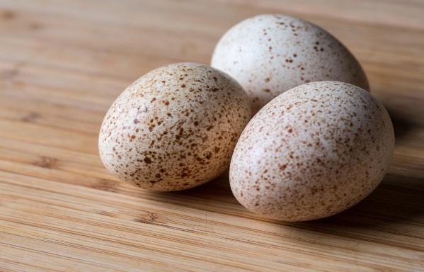 Для высиживания отбирают яйца средних размеров правильной формы