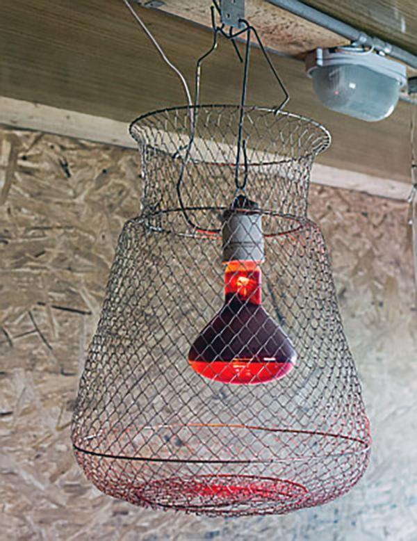 Инфракрасная лампа в защитной сетке