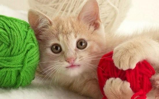 Катозал назначают маленьким котятам для роста, развития, усиления иммунитета