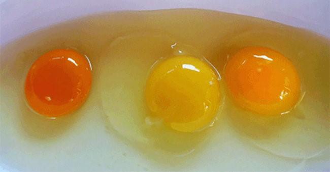 Цвет желтков зависит от количества и качества кормов