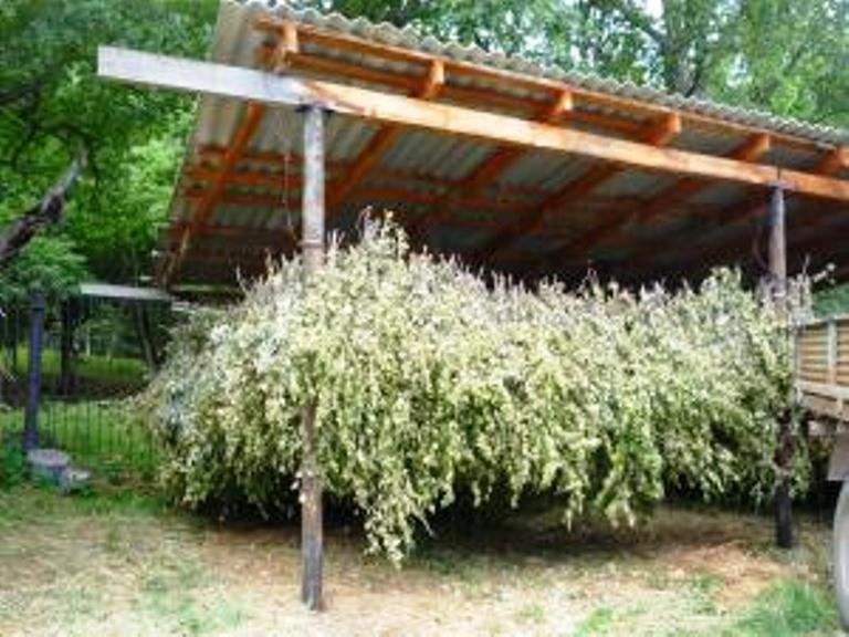 Заготовка кормовых веников