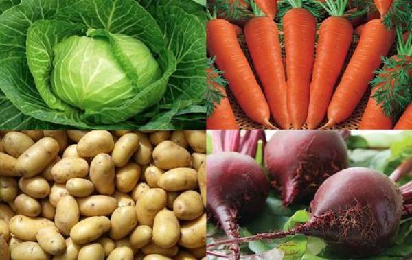 Капусту, морковь и свеклу надо давать в измельченном виде