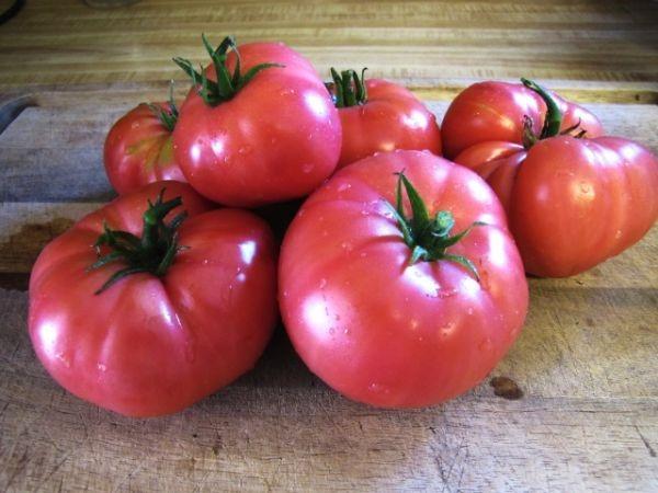 Урожай томатов сорта «микадо розовый»