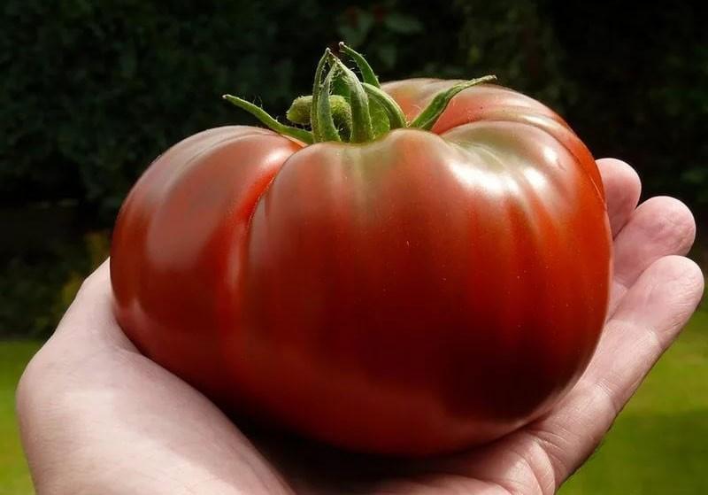 Крупный плод сорта «шапка Мономаха»
