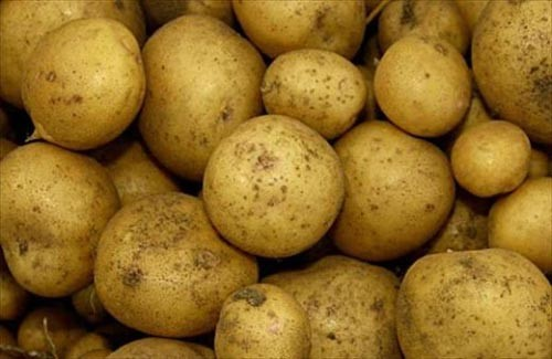 Клубни картофеля сорта Невский