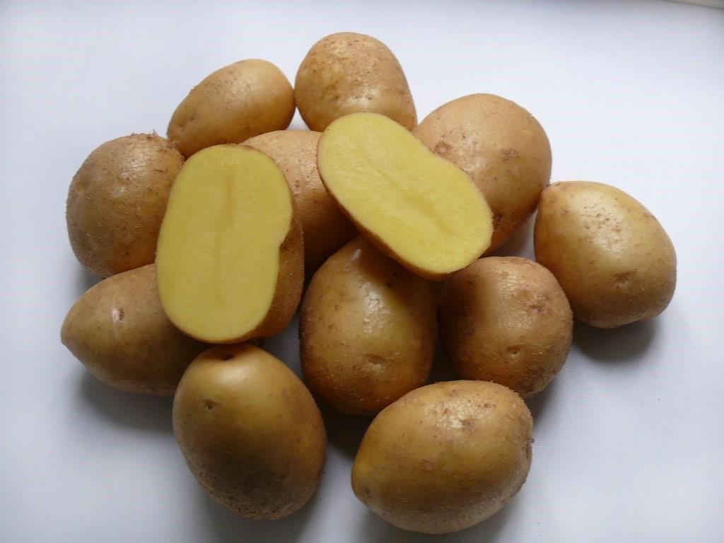Картофель Невский с тонкой кожицей и нежной мякотью