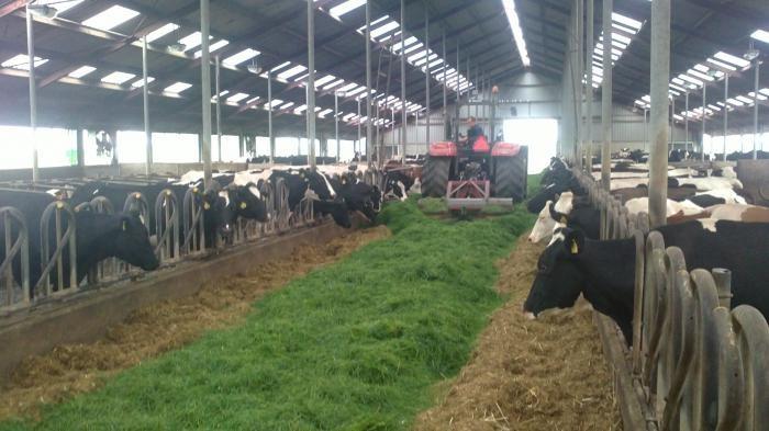 Коровам необходимо создать оптимальные условия содержания