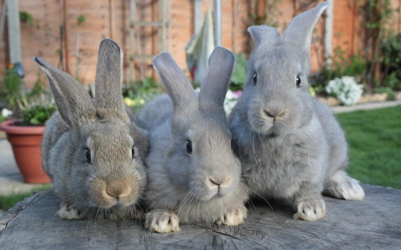 Вакцинации помогают кроликам оставаться здоровыми