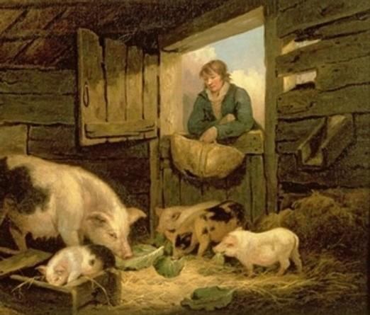 Наблюдающий за свиньями