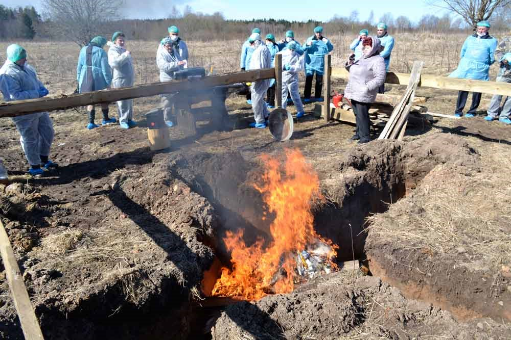 Сжигание трупов животных в поле