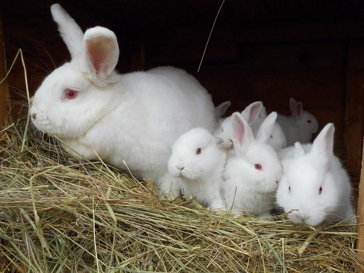 Эти кролики употребляли Соликокс, поэтому они здоровы