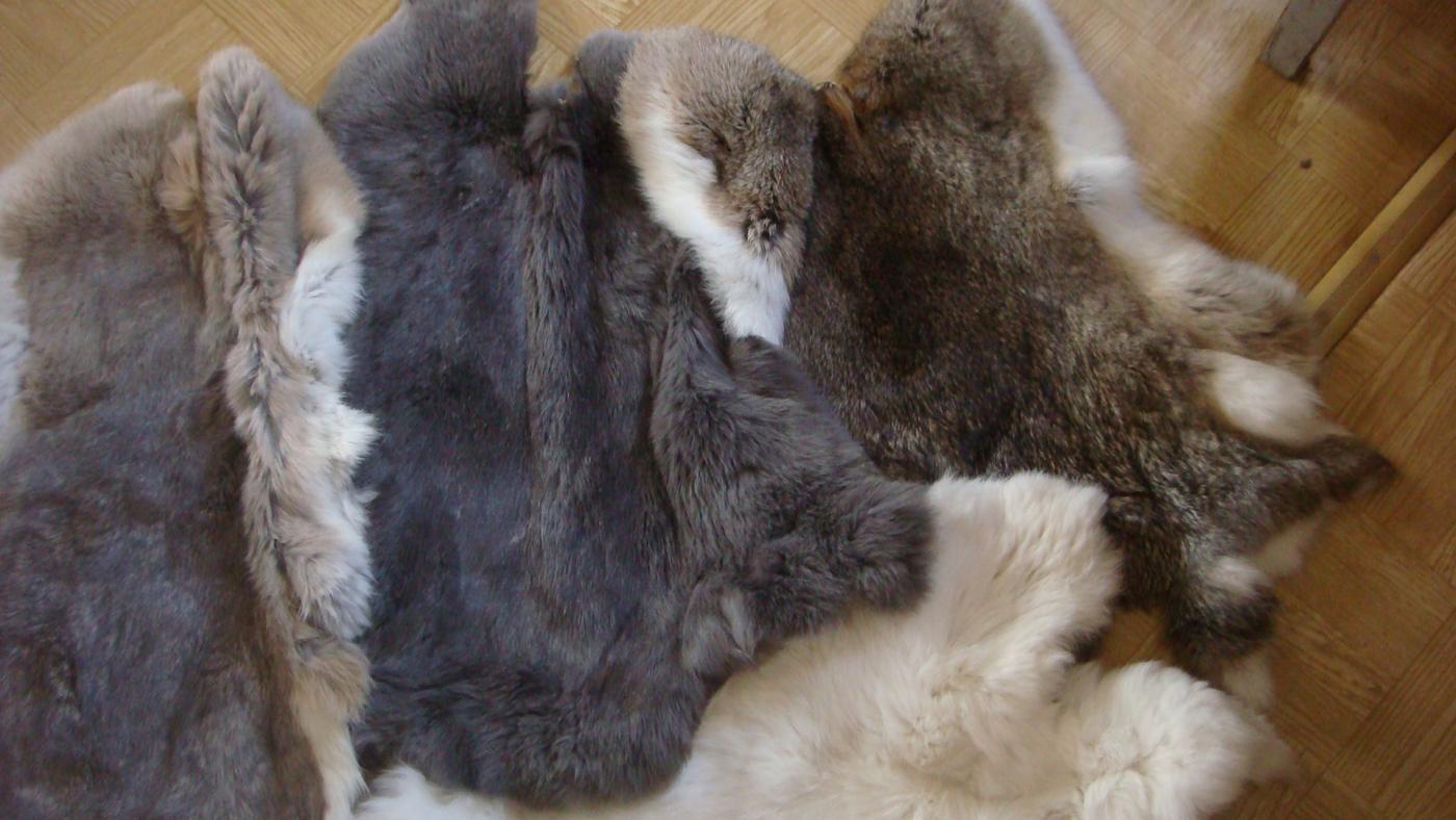 Выделка шкурок кролика в домашних условиях 70