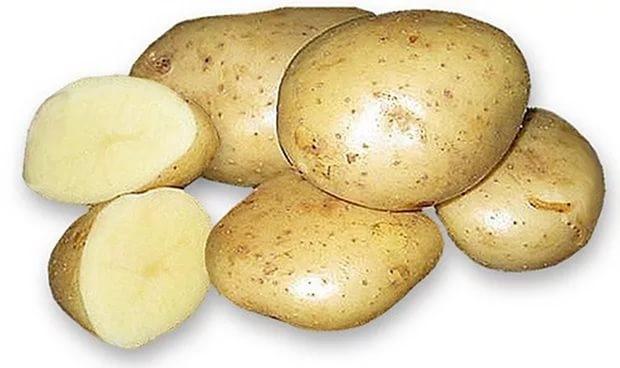 Картофель «Удача» возделывается на всей территории России и в других государствах