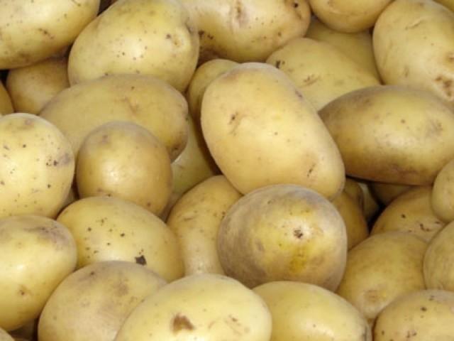 Среди отечественных сортов картофель «Удача» можно по праву назвать одним из лучших