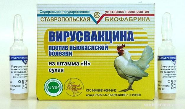 Вакцина для птиц от болезни Ньюкасла