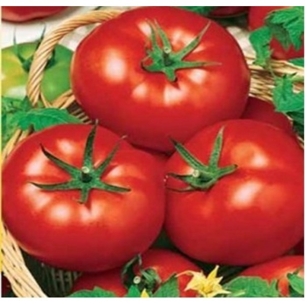 Томат «Яблонька России» является универсальным сортом, предназначенным для употребления, как в свежем виде, так и в консервированном