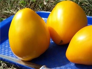 Универсальные томаты сорта «золотое сердце»