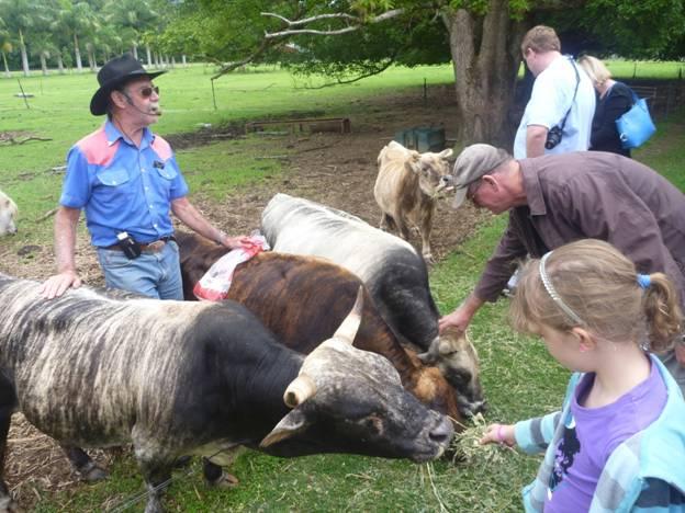 Хозяева со своими миниатюрными коровами