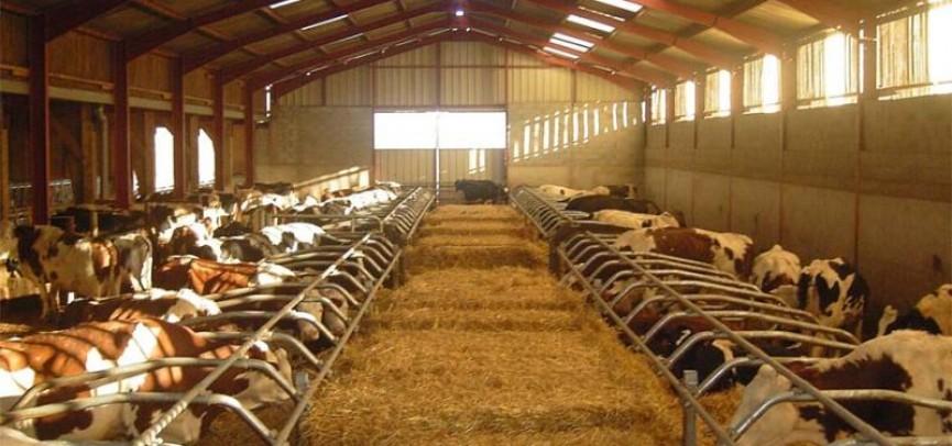 Холодный способ содержания коров