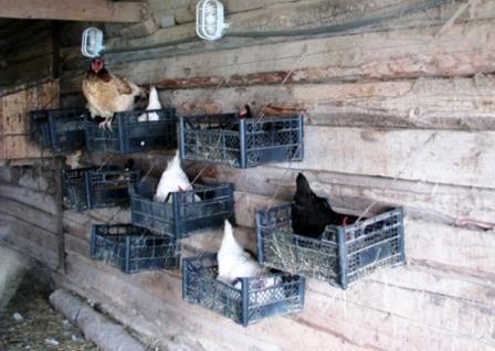 Куриные гнезда из ящиков
