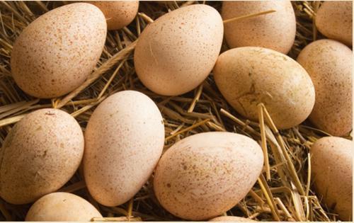 Индюшиные яйца правильной формы