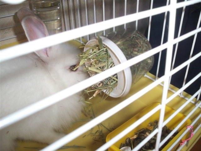Кролик ест с кормушки