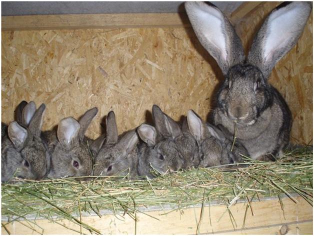 Кроличье потомство