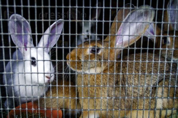 Сетка в кролиководстве