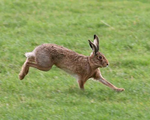 Почему крольчиха не подпускает кролика