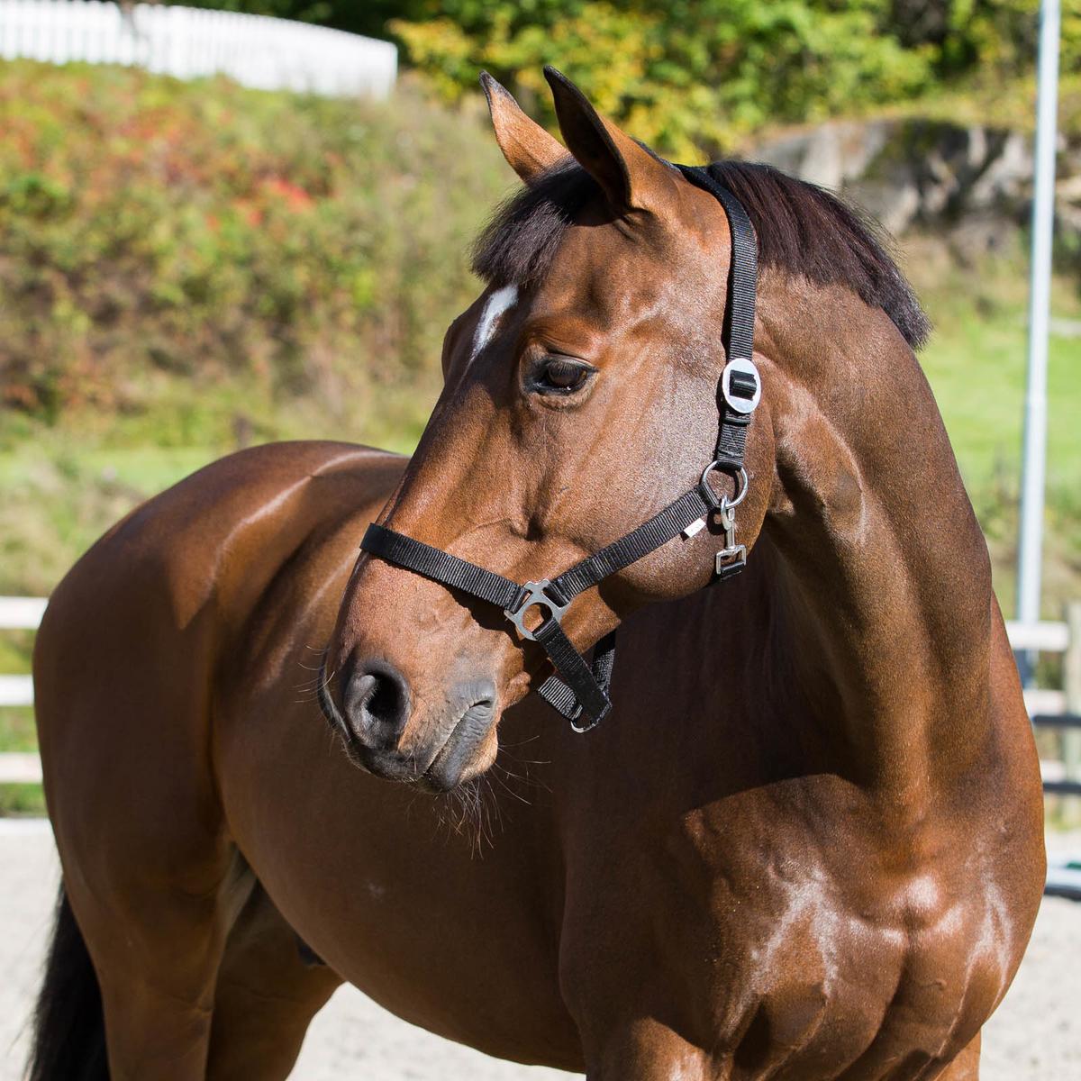 Уздечка для лошади своими руками фото 533