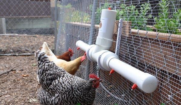 Ниппельная поилка на несколько куриц