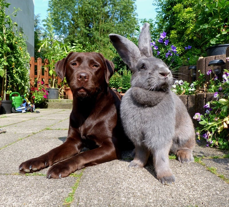 Привесы у кроликов в зависимостит от возраста