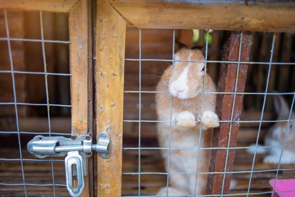 Содержание кроликов в шедах