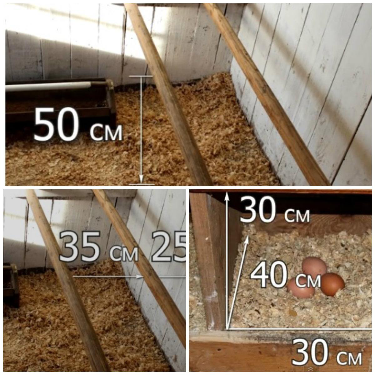 Оптимальные параметры, по которым надо строить насесты и гнезда