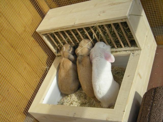 Кормушки под сено кроликам своими руками