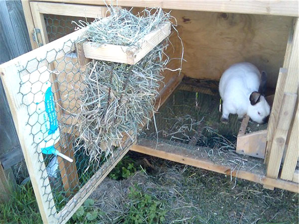 Фото как сделать кормушки для кроликов