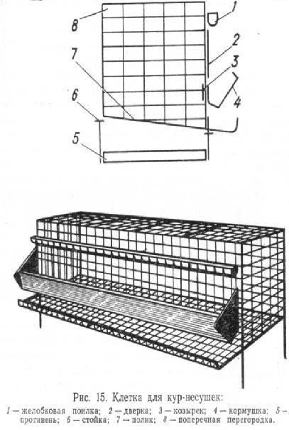 Размеры клетки для 10 кур несушек своими руками