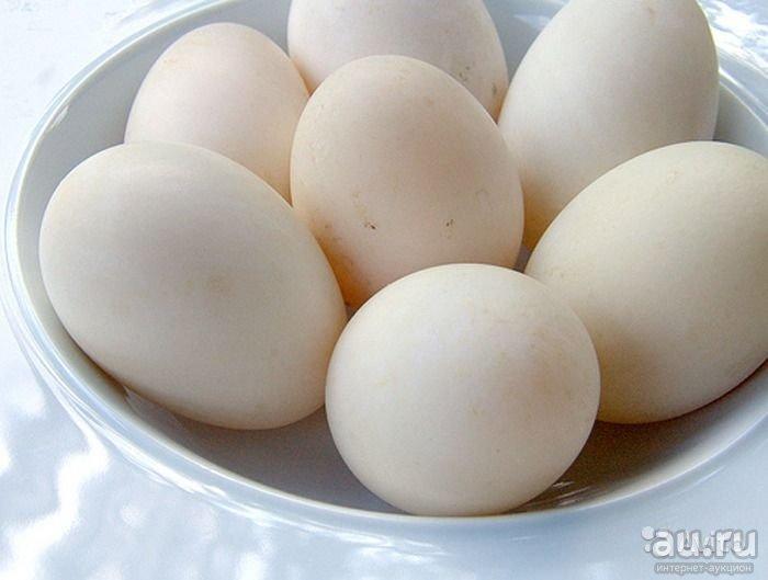 Яйца уток агидель