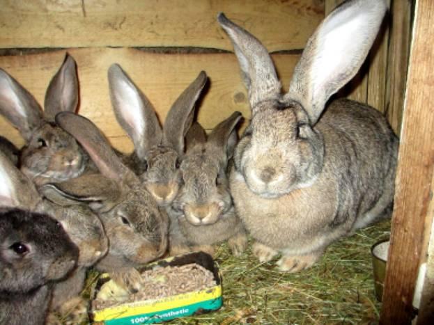Крольчиха с крольчатами в отдельной клетке