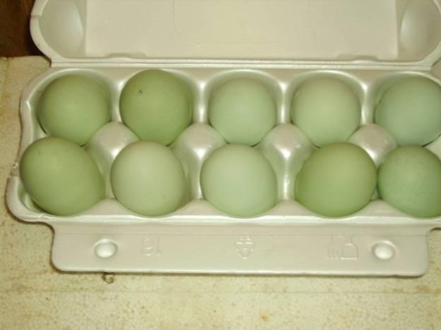 Яйца китайских курочек