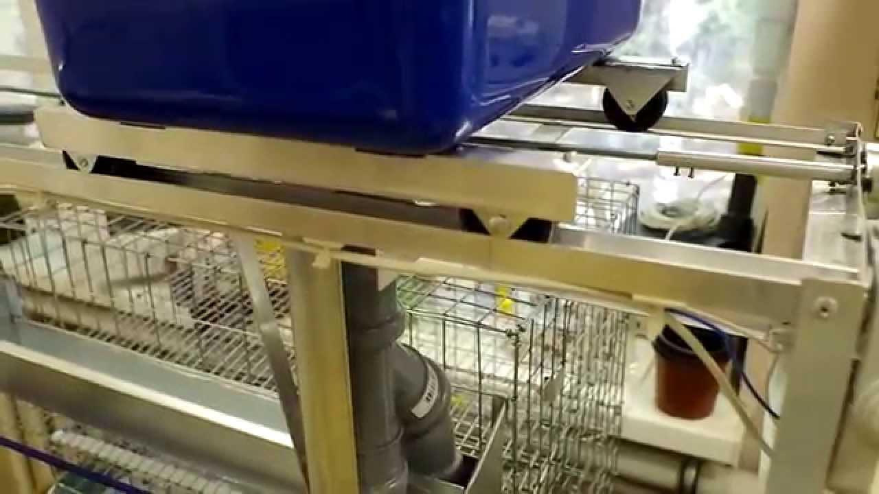 Перепелиная автокормушка