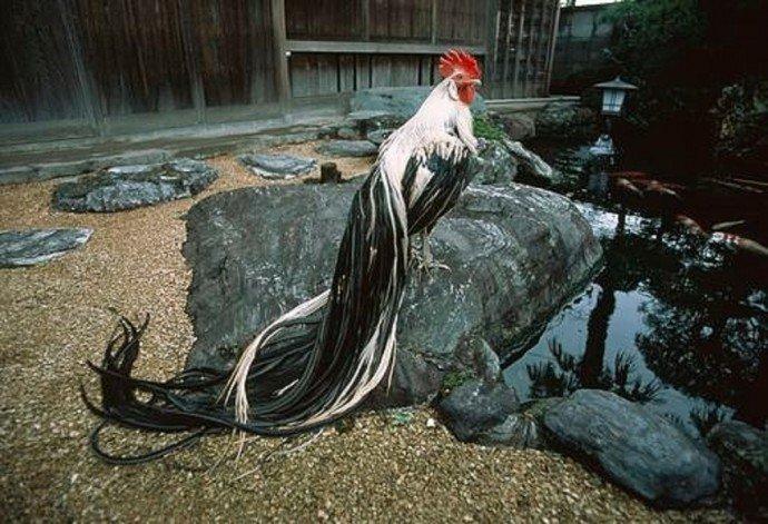 Насесты для этих птиц могут быть разными по форме