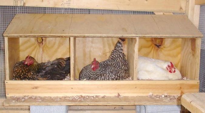Гнездо для кур в курятнике