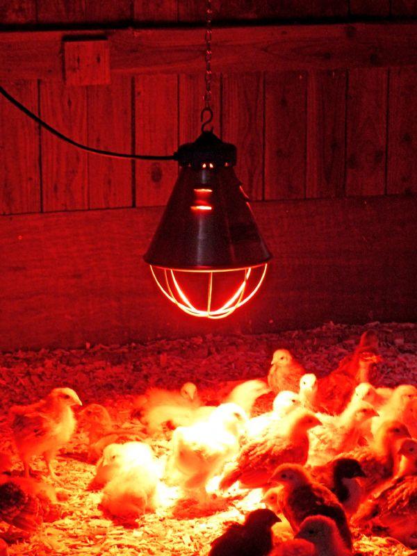 ИК-лампа мощностью 250 Вт