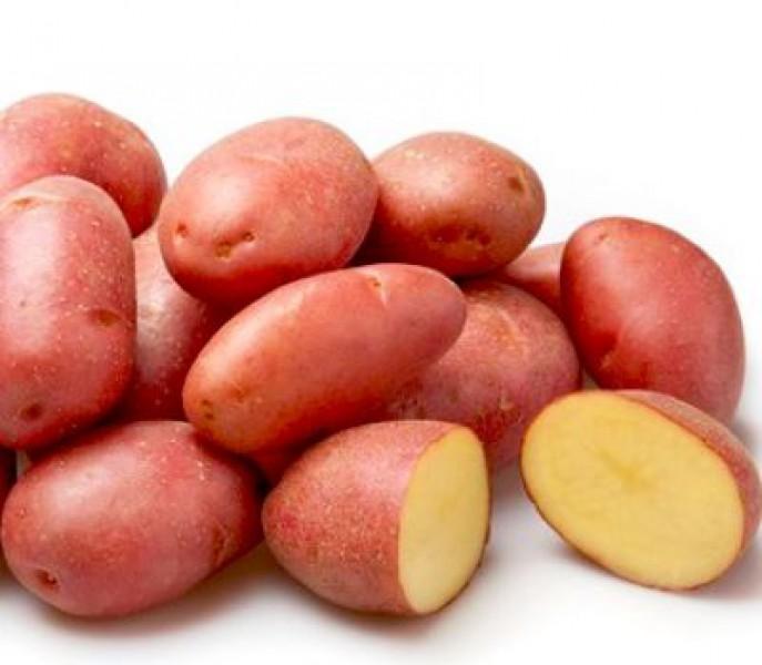 Желтая мякоть  картофеля сорта «розара»