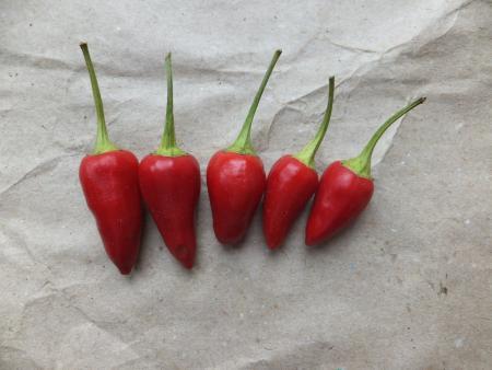 Биологическая зрелость перцев «феникс»